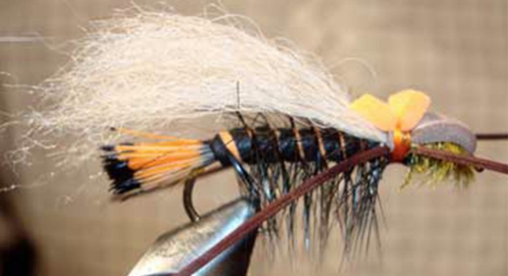 This is the first salmon show of - Larry Smith Outdoors