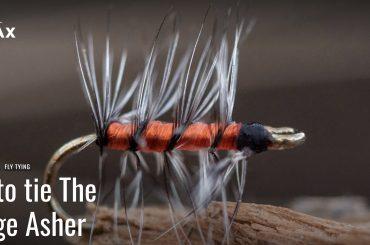 Orange Asher fly
